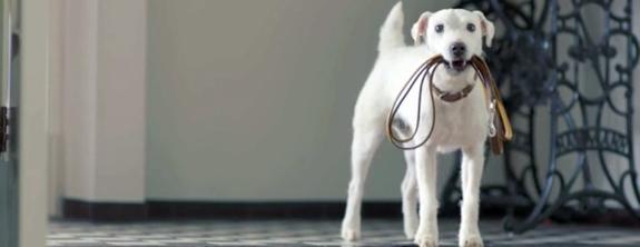 volkswagen-dashund